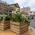 Boxes with flowers at a market in London thumbnail