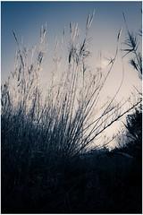 MG4357 (eleni.makrydaki) Tags: reeds winterscene countryside urbanlandscape landscapes