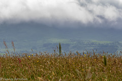 Killarney, Ireland - Summer 2018 001.jpg (jbernstein899) Tags: mountains emeraldisle killarney ireland green