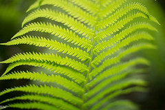Fern (MikeWeinhold) Tags: fern flora plant concord 50mm12l