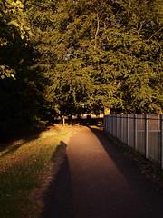 Sunrise in Harold Park (Mel_is_Moving) Tags: epl6 olympus pen trees outside outdoors fence morning sunrise path shadows bradford westyorkshire uk