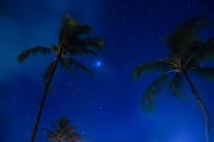 Palmtree_MW (bekajma19) Tags: palms milkyway hawaii nikond3100 kauai sky