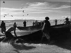 Portugal - The Fishing Net' (Christian Lagat) Tags: portugal costadacaparica ocean plage beach pêche fishing noiretblanc blackwhite tracteur tractor filet net pêcheurs fishermen ombre shadow mouettes seagulls
