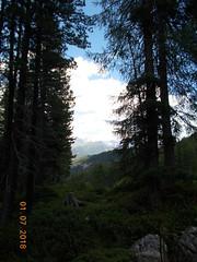 DSCN0098 (Puntin1969) Tags: scorcio vista bosco nikon coo estate vacanze montagna dolomiti valdifassa fassa sole
