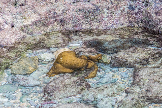 life in the tide pools