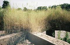 Behind the collapsing passenger jetties (knautia) Tags: riveravon bristol england uk july 2018 film ishootfilm olympus xa2 olympusxa2 kodak kodacolor 200iso nxa2roll34 river avon mud cumberlandbasin floatingharbour jetty lowtide grass