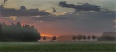 Vor Sonnenaufgang (Robbi Metz) Tags: deutschland germany bayern bavaria reischenau augsburgwestlichewälder landscape forest sunrise clouds trees colors canoneos