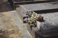 Paris No 77 (• CHRISTIAN •) Tags: paris france montparnasse cimetière cemetery graveyard mort death naturemorte fleur flower 50mm f14