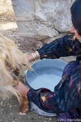 20180330-_DSC0184.jpg (drs.sarajevo) Tags: sarvestan ruraliran iran nomads farsprovince chamsatribe