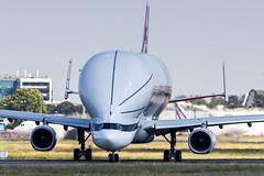 Airbus A330-743L Beluga XL (Rami Khanna-Prade) Tags: msn1824 tls lfbo airbus blagnac toulouse france avgeek a330 a332 a330200 belugaxl a330743l a330bxl fwbxl aib a33b rollsroyce trent avgeeks stelia a337