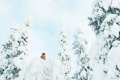 Small cutie (Karl Adami - www.karladami.com) Tags: kuukkeli kuusamo konttainen siberianjay songbirds passerines snowy tykky cold beautiful wildlife luonto finnish finland ruka white small cutie