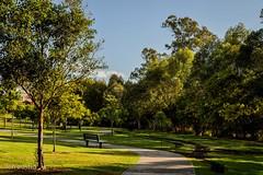 AS SHADOWS LENGTHEN (len.austin) Tags: afternoon australia australianplants brisbane deserted grass landscape outdoor park winter 7dwf