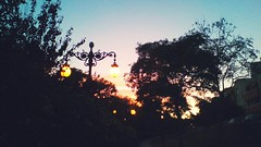 Tired sunsets (Otherwise_m) Tags: sunset tired beauty beautiful parc park trees tree farola lights night evening colors colored aguadulce spain summer españa espagne almeria