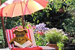 "BEAR GIJS SAYS; ""KEEP CALM AND READ A BOOK."" || BEER GIJS ZEGT; ""IK HOU ME KALM EN GA LEKKER EEN BOEK LEZEN."" (Anne-Miek Bibbe) Tags: happyteddybeartuesday bear teddybear beertje teddybeer beer speelgoedbeer nounours canoneos700d canoneosrebelt5idslr annemiekbibbe bibbe nederland 2018 tuin garden jardin giardino jardim natuur nature boek lezen book reading hot heet warm parasol zon sun gijs beergijs"
