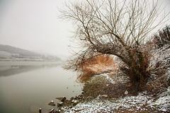 Tree by lakeshore (Raoul Pop) Tags: stone rocks shore snowfall lake tree winter cold somewhere transilvania romania ro