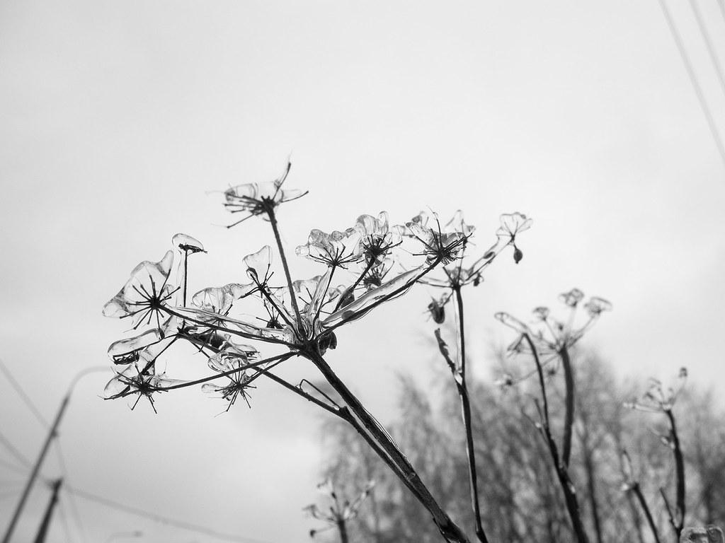 фото: Зимнее #4