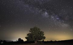 Primera Vía láctea del año, esta vez sobre una sabina. (:) vicky) Tags: milky night nubes nocturna sabinamilenaria teruel aragón víaláctea juniperus thurifera