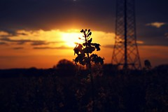 goodbye weekend (Ralaphotography) Tags: spring frühling springtime sunset sunday blossom sonnenuntergang nature natur outdoor light shadows rapeseed field