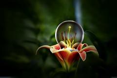 Bulbo in fiore (Zz manipulation) Tags: art ambrosioni acqua zazmanipulation fiori foglie natura lampadina bulbo