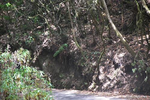 Національний парк Гарахонай, Гомера, Канарські острови  InterNetri  0708