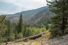 Fern Lake Trail (sgplewka) Tags: urlaub rockymountainnp usa 2017 estespark colorado us
