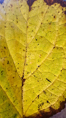 Autumn finished 😔 (alejandroaliwen) Tags: autumn otoño station goodday flora hoja hojadeotoño picoftheday out yellow happy nature sunday perfection perfect cool venas beaty best wow color colour photo pic look interest chile macro