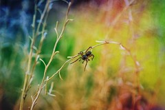 Spider ... (Julie Greg) Tags: spider nature texture grass park colours canon5dmarkiv macro