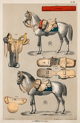 A chromolithograph of horses with antique horseback riding equipments from an antique horseback riding catalog (1890). Digitally enhanced from our own original plate. (Free Public Domain Illustrations by rawpixel) Tags: otherkeywords tags accessory activity animal antique art belt bit bridle catalog cc0 chromolithograph drawings equestrian equine equipment halter harness historic history horse horseback illustrated illustration illustrations lithograph lovers old picture plate power print publicdomain rein retro riding saddle seat sketch stallion stirrup tack transport transportation vintage voyages warriorshorse