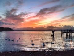 (martinasabbatini) Tags: summer icoloridelmiouniverso clouds nuvole monti water acqua sunset estate nature natura cigni tramonto landscape panoramas panorama lake lago italy italia roma lagodibracciano anguillarasabazia