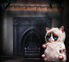 Too cold (pure_embers) Tags: pure embers laura uk pureembers photography kitty teddy grumpy cat art doll cute adorable rioky studio