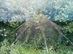 tridral_2018-06-15 (tridral) Tags: cymru wales dinbychypysgod tenby pabell tent