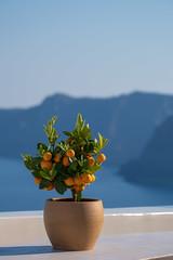 I Know A Place (sdupimages) Tags: calamondin plante oranger orangetree ciel sky blue orange tree sea mer seascape landscape background fruit bokeh mediteranean greece grece santorini