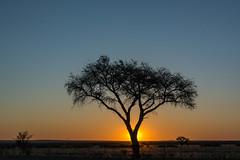 african sun (Karl-Heinz Bitter) Tags: afrika keetmanshoop namibia africa karasregion na