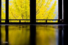 "Japan-2b-039-Miyajima - Senjôkaku (david ""Djannis"") Tags: contrejour arbreaux40écus ginkgobiloba tree arbre bois temple monument 広島 hiroshima 日本 japan japon 鳥居 宮島 miyajima senjôkaku pavillon automne autumn lignes"