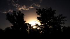 toward heavens (Darek Drapala) Tags: heaven sky skyskape sun silhouette sunset nature natural trees panasonic poland polska panasonicg5 lumix light