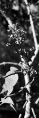 (eelend) Tags: black white berlin bookmark plant branch sunlight sun shadow contrast