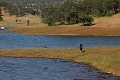 IMG_0493 (Anthony Lockstone) Tags: don pedro lake california