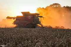 CTF Wheat Harvest 2018 | CASE IH (martin_king.photo) Tags: harvest harvest2018 ernte 2018harvestseason ctfharvest controllentrafficfarming ctf wheat grain combineharvester combine harvester new modernmachine summerwork powerfull martin king photo machines strong agricultural great czechrepublic agriculturalmachinery farm working modernagriculture landwirtschaft martinkingphoto moisson machine machinery field huge big sky agriculture power dynastyphotography lukaskralphotocz day fans work place yellow gold golden eos country lens rural camera outdoors outdoor caseih macdonheader macdon macdonindustries goldenhour colours landscape fields lines axialflow controlledtrafficfarming