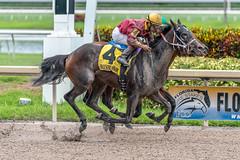 All 8 legs up (jermaynewagner@bellsouth.net) Tags: horse thoroughbred jockey racing grass dirt up air hallendale florida flying sony a7riii 70200 28 gm gulfstream gp