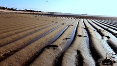 Praia de Barra Grande PI (David Jales) Tags: barragrandepi barragrande praia beach brasil brazil ferias turismo piaui ppc piauiphotoclube canon t5i