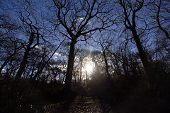 I wanna go to the sun  -  (Selected by GETTY IMAGES) (DESPITE STRAIGHT LINES) Tags: november season autumn nikon d7200 nikond7200 paulwilliams despitestraightlines flickr morning am nature mothernature naturalbeauty beauty tree trees wood woodlands forest leaves fallenleaves winter branch branches bark wet bexleyheath kent bexleyheathkent parkland parklife grass landscape nikon1024mm getty gettyimages gettyimagesesp despitestraightlinesatgettyimages paulwilliamsatgettyimages lesnesabbeywoods abbeywood abbeywoods nikon1024mmf3545geddx