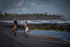 20180723 Praia do Forte 094 (blogmulo) Tags: praia beach praiadoforte brazil travel salvador brasil horse light
