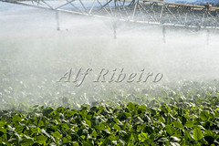 Alf 0047 - 0236 (Alf Ribeiro) Tags: agribusiness agriculture brazil brazilian economy rural soybean water agricultural bean blue business crop environment equipment farm farming farmland field green grow growth harvest industry irrigate irrigating irrigation land landscape leaves line liquid natural nature organic pivot plant production sky soil soy splash sprinkler supply system technology wet