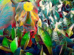 Rhino salad 02 (Podsville) Tags: blackrhino dicerosbicornis june lansing michigan photoshop potterparkzoo topazairemix mammal rhinoceros summer