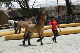 2018.06.21.052 HARAS du PIN - Spectacle équestre, présentation des chevaux