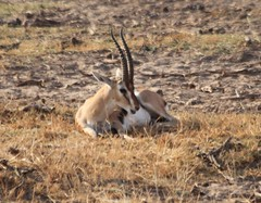 KEN0235 (lorstierlen) Tags: kenya wildlife birds nature amboseli masai mara diani nairobi lorelei
