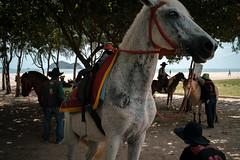 * (Sakulchai Sikitikul) Tags: street snap streetphotography summicron songkhla sony a7s 35mm leica thailand samilabeach seascape horse cowboy silhouette sea sand