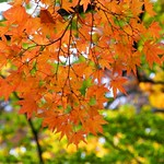 Leaves in Gold thumbnail
