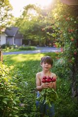Always willing to help harvest (Elizabeth Sallee Bauer) Tags: nature boy child childhood fresh garden gardening green happiness harvest kid outdoors outside planting portrait summer vegatable veggies youth