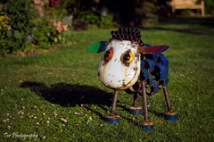 Sheep (Tor Photography) Tags: sheep metal art pentax pentaxk30 summer torphotography red pink purple blue yellow green white orange